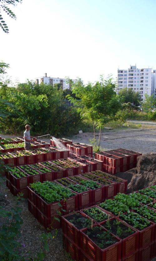 urbanelandwirtschaft_prinzessinnengarten1klein1